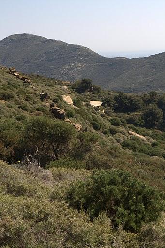 Хълмовете на Андрос