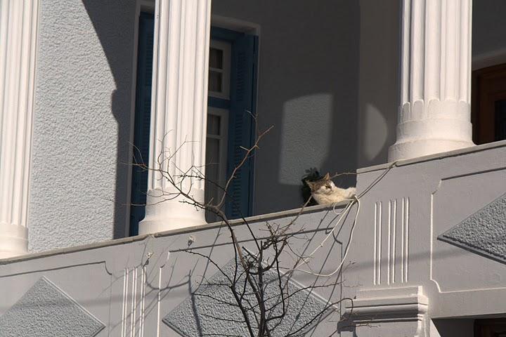 Котка на слънце в Андрос
