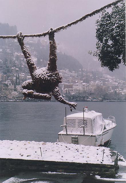 Маймуна през зимата в Монтрьо