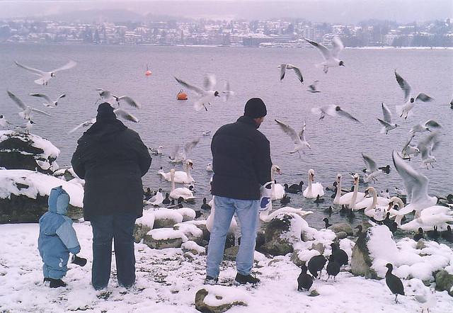 Да нахраним птичките в Цюрихзее
