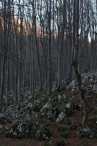 Още гора и карст