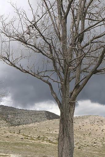 Дърво в подножието на Ворас
