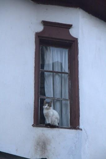 Котка върху студен ламаринен перваз