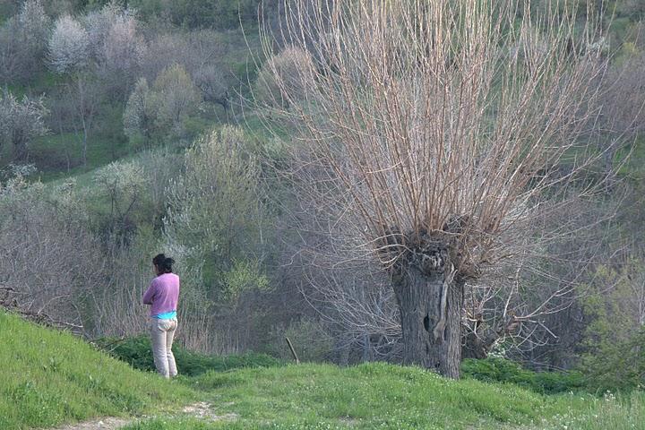 Дърветата на Вис