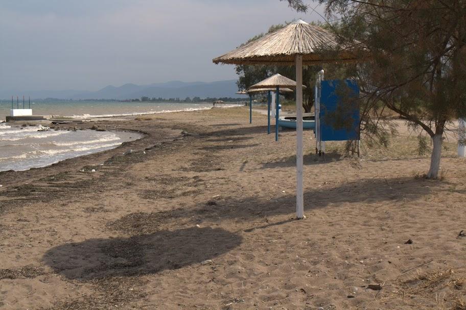 Плажчето на Димитриада крие таралежи