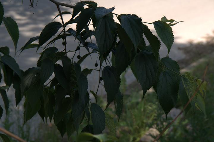 Джидживка, известна и като хинап