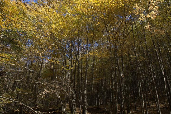 Есен по рида Лакавица