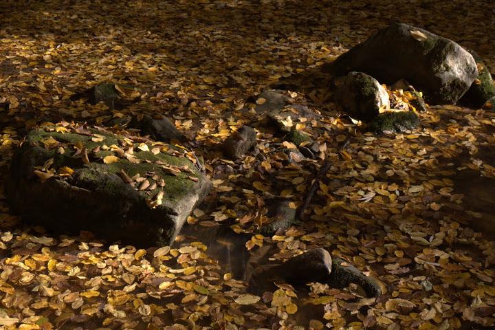 Листа в реката