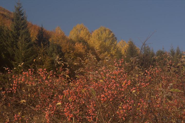 Цветна есен над Бракьовци