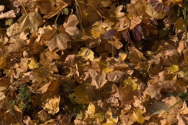 Есенни листа по сух пустинен вятър