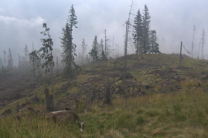 Опожарената гора над хижа Война