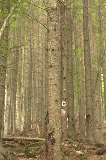 Хубава гора, но я секат здраво
