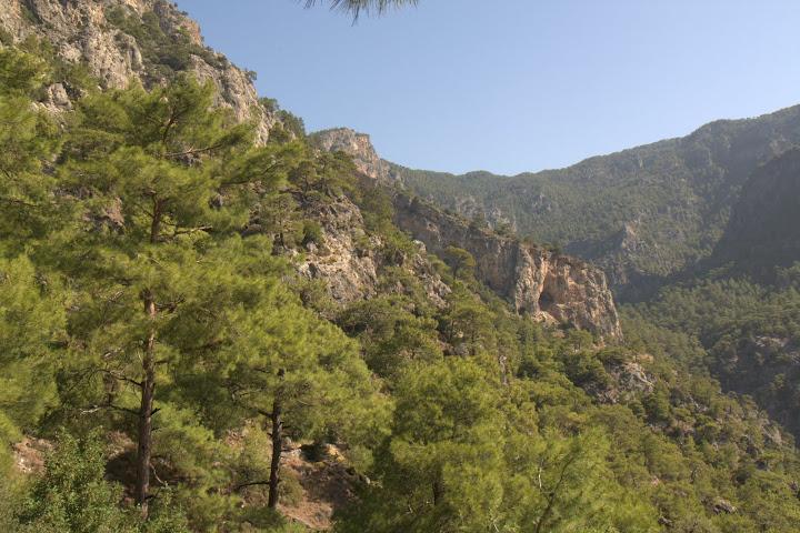 Борови гори над Кабак