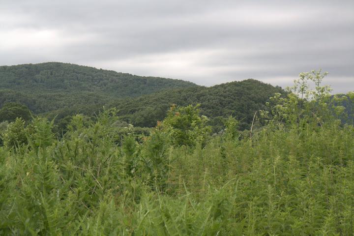 Край село Кости в Странджа