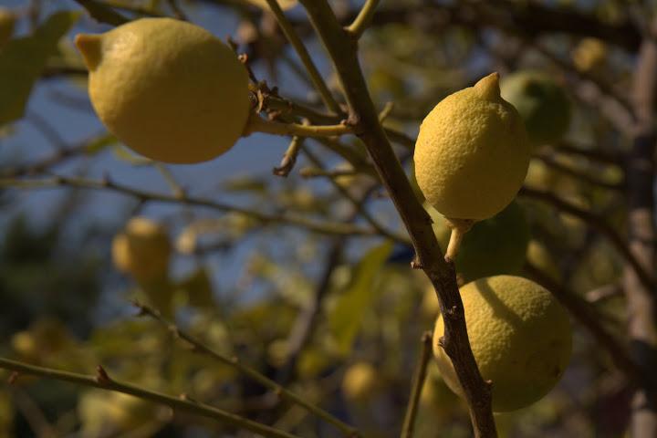 Лимони от Симена