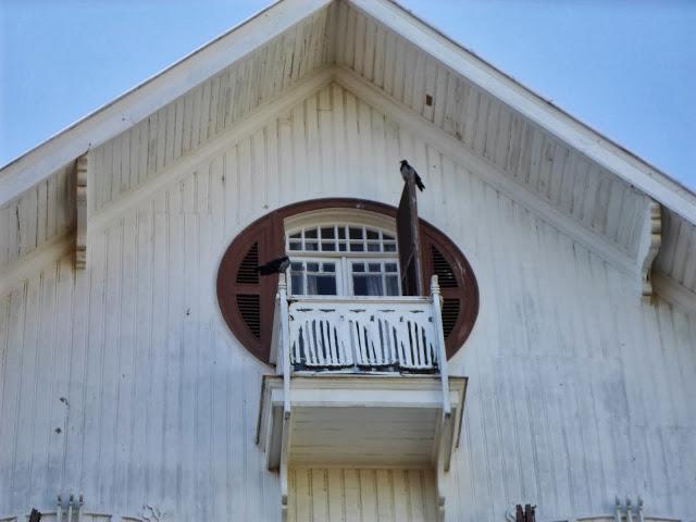Птица на терасата