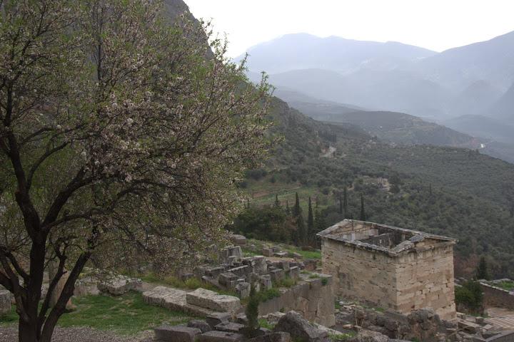 Цъфнали дръвчета и светилища