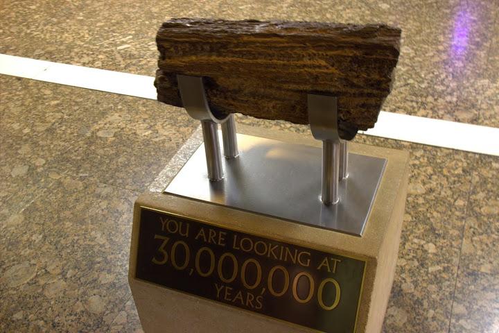 Вкаменело дърво на милиони години