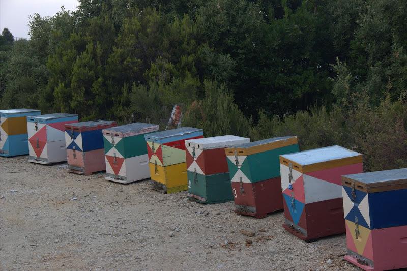 Пчелни кошери зад плажа