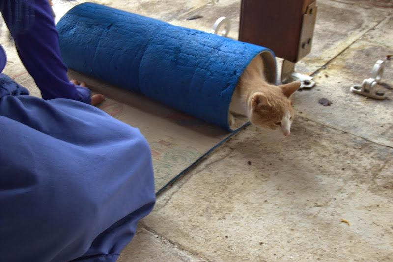 Даже на котката й беше студено