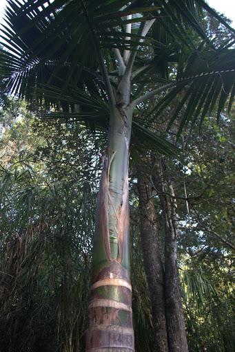 Палми в джунглата