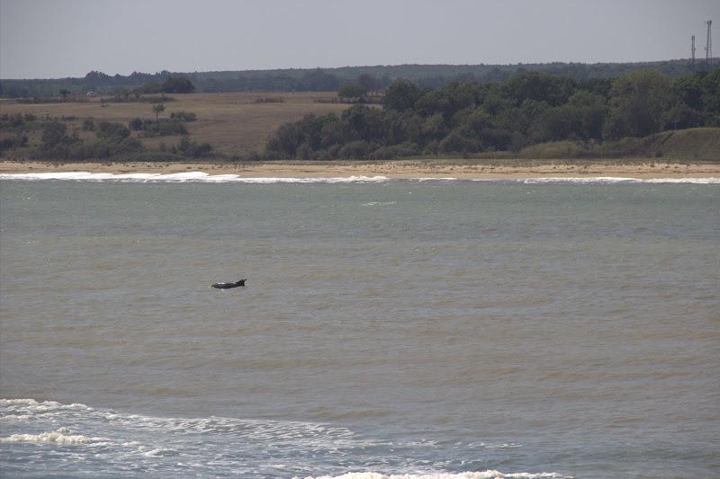 Делфин край Резовска река