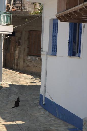 Глоска котка