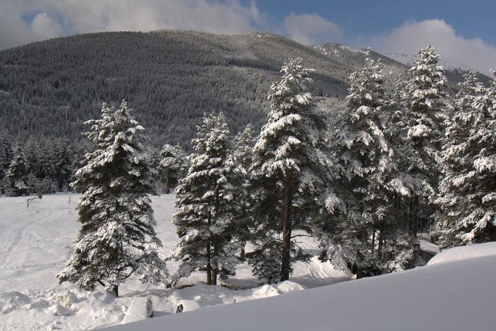 Гората на Семково
