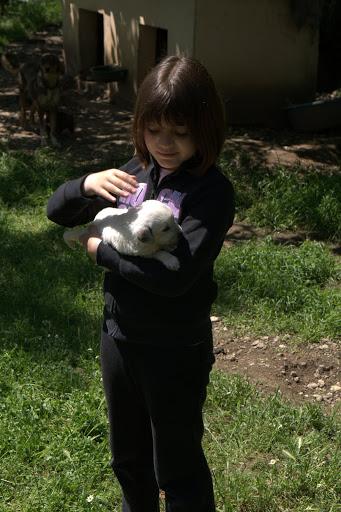 Момиче с куча в двора